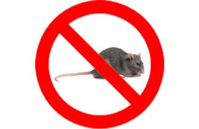 Thuốc diệt chuột tiếng Anh là gì?